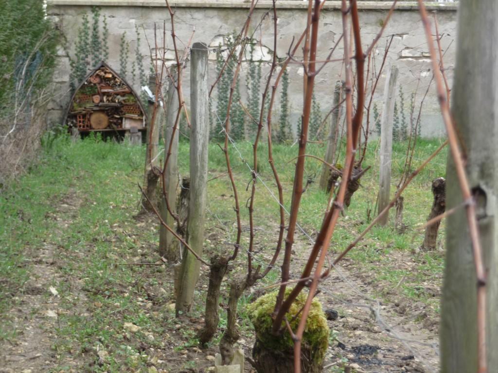 Hotel à insectes dans les vignes du Domaine Masson-Blondelet