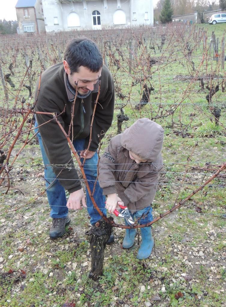 PF Masson du Domaine Masson-Blondelet taille une vigne de Pouilly-Fumé avec l'école maternelle.