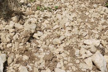 Wine making by soil domaine masson blondelet for Soil 60 years